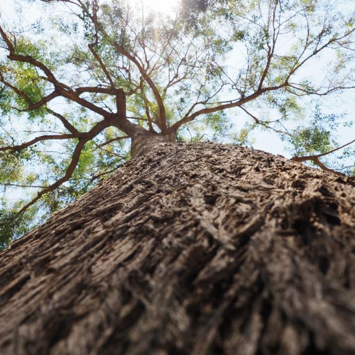 8/6 - Tree