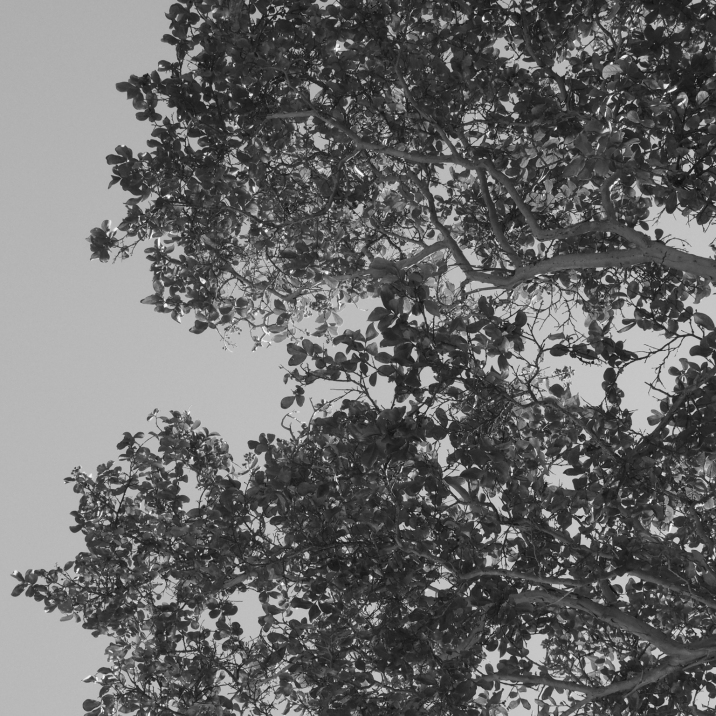 8/1 - Black & White